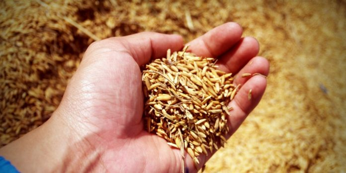 Spelt: Benefits and Side Effects