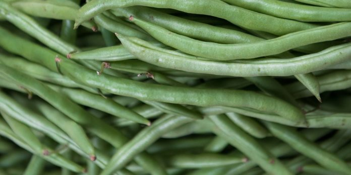 vegetabe
