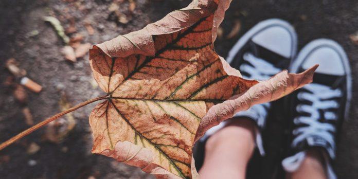 fallen dry leaf